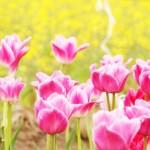 春はお花モチーフのボディピアスで華やかに*