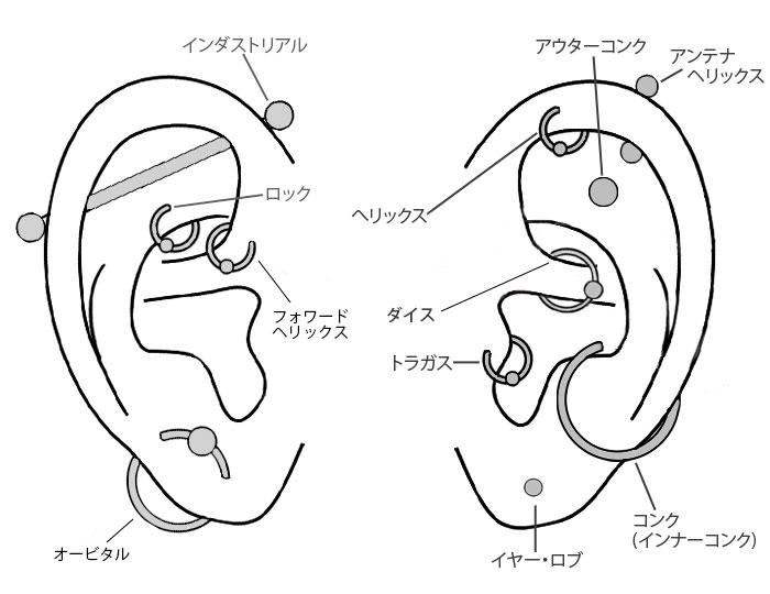 ピアッシング出来る耳の部位