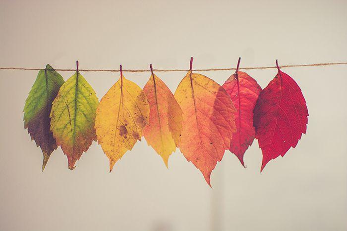 紅葉した葉っぱの画像